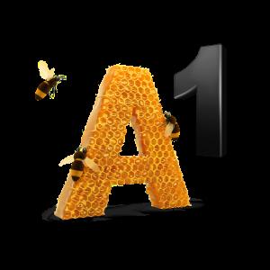 A1_04_02HON_SLO_3_L
